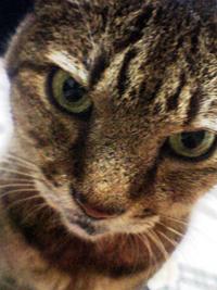 猫アレルギーと、萌えェ~・・え?_b0000228_23315986.jpg