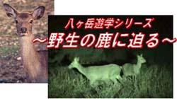 ■イベント情報特別編_e0046474_18542869.jpg