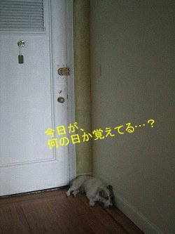 c0064796_2301959.jpg