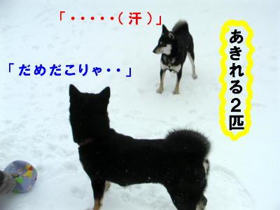e0000946_159303.jpg