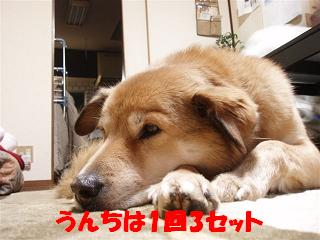 c0000189_1330128.jpg