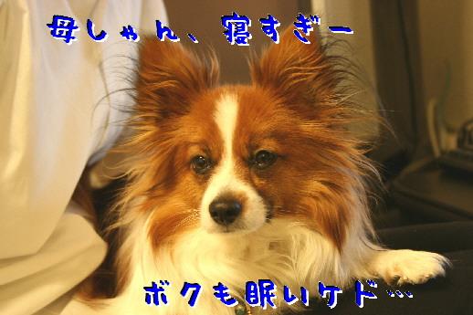 d0013149_2371311.jpg