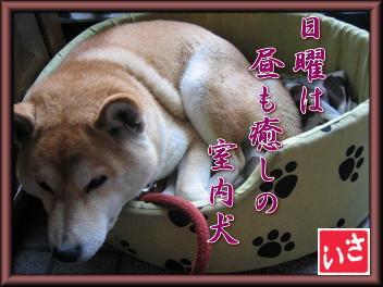 犬川柳_c0049950_21294515.jpg