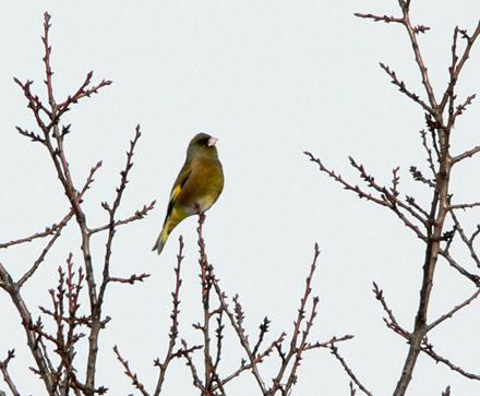 野鳥観察_e0084756_23352998.jpg