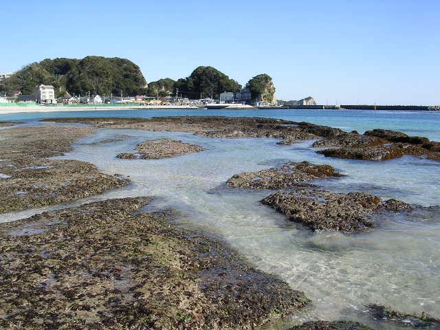 2006年2月6日興津海岸_f0060461_765986.jpg
