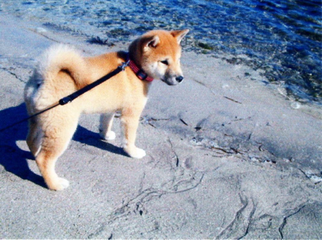 2006年2月6日興津海岸_f0060461_8251195.jpg