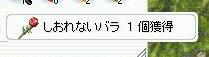 c0072582_284790.jpg