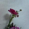 f0063634_4275257.jpg