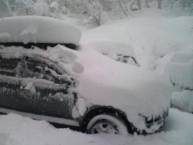雪よ降れ!_f0053060_1734978.jpg