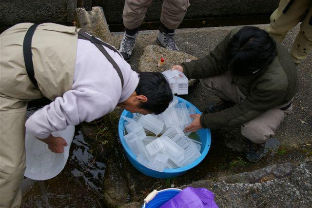大見川水系発眼卵放流&BOSE Fishing in 松原湖_f0064359_21562127.jpg