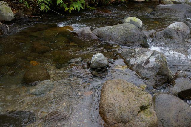 大見川水系発眼卵放流その後:バイバードボックス回収 _f0064359_22104775.jpg