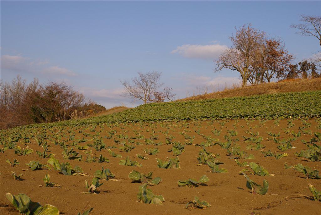 足柄上郡大井町の富士見塚ハイキングコースウロチョロ編 _f0064359_22291113.jpg