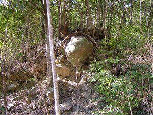 自然植生の山_e0002820_12101763.jpg