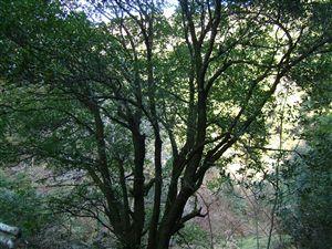 自然植生の山_e0002820_12131035.jpg