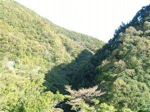 自然植生の山_e0002820_121542.jpg