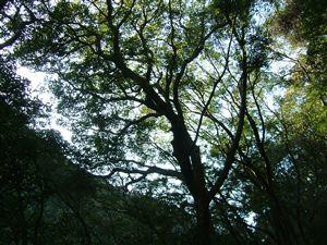 自然植生の山_e0002820_12639.jpg