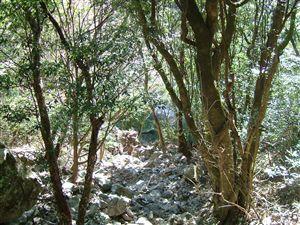 自然植生の山_e0002820_1264065.jpg