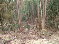自然植生の山_e0002820_1285294.jpg