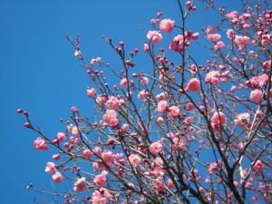春近し?_c0038434_17254269.jpg