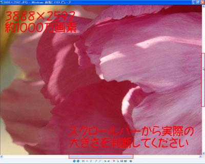 d0020290_1745542.jpg