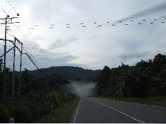ボルネオ旅行記 (4) ラフレシアを求めてジャングル温泉_b0054727_23575978.jpg