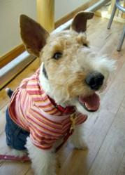 Dog Cafe BREAD_c0070377_18204170.jpg