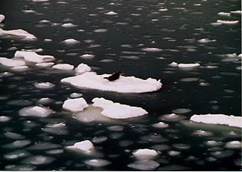 氷の上のあざらし君は@北海道_d0035397_22332049.jpg