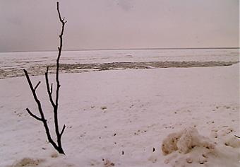 氷の上のあざらし君は@北海道_d0035397_223448.jpg