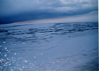 氷の上のあざらし君は@北海道_d0035397_22353240.jpg