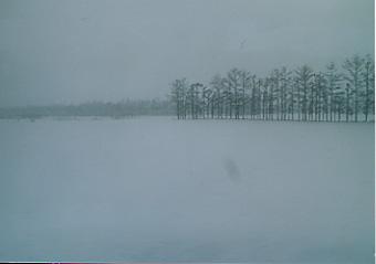 氷の上のあざらし君は@北海道_d0035397_23231874.jpg