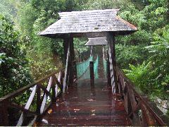 ボルネオ旅行記 (4) ラフレシアを求めてジャングル温泉_b0054727_0115423.jpg