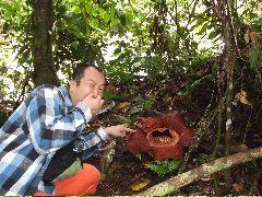 ボルネオ旅行記 (4) ラフレシアを求めてジャングル温泉_b0054727_039555.jpg