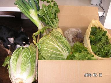 家庭菜園の野菜_d0006467_223949.jpg