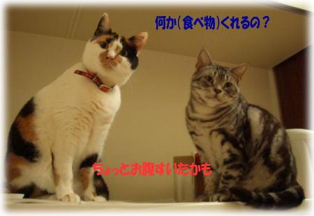 c0017777_032430.jpg
