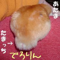 b0016983_1011072.jpg