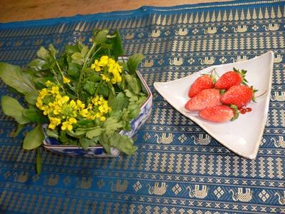 カリスマ京野菜たち!_a0063096_17523448.jpg