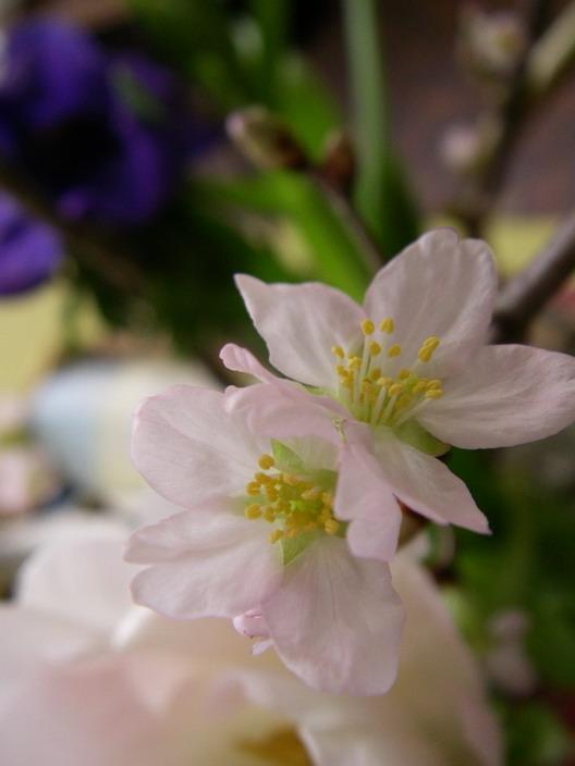 春を先撮り_f0033205_1446025.jpg