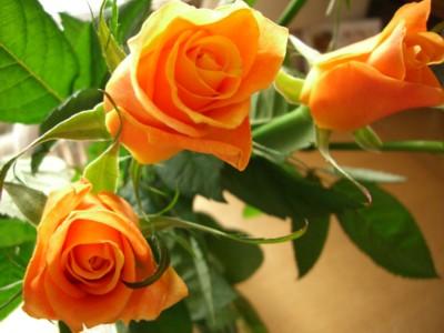 オレンジオレンジ_c0006826_6365395.jpg