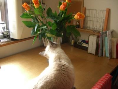 オレンジオレンジ_c0006826_6371091.jpg