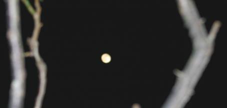 「山川草木国土悉皆成仏」:今日、2月15日は涅槃会_c0014967_1352473.jpg