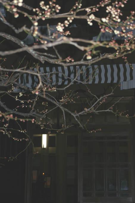 「山川草木国土悉皆成仏」:今日、2月15日は涅槃会_c0014967_1354721.jpg