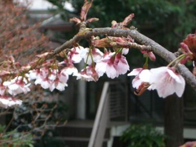 春来たりなば_c0006826_6215792.jpg