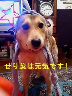 b0069163_22395431.jpg