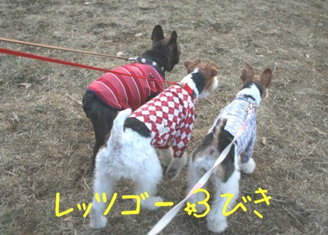ドッグラン&カフェ はるひ野_c0070377_21522218.jpg
