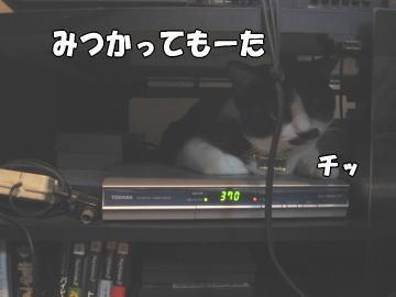 b0041182_21424955.jpg