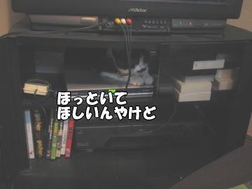 b0041182_21431815.jpg