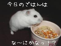 b0016983_10184833.jpg