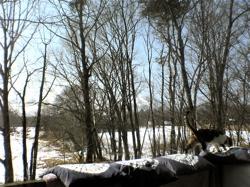 つかの間の春の訪れ。_d0028589_19214198.jpg
