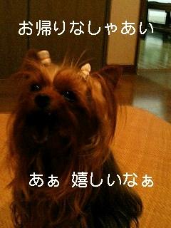 f0040805_1033134.jpg
