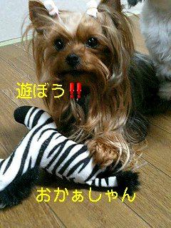 f0040805_104151.jpg